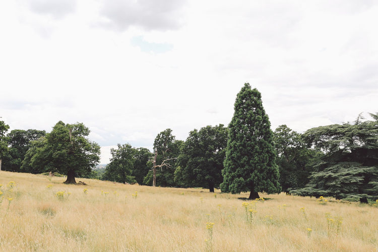 Beauty In Nature Cloud - Sky Countryside Day Field Grassy Green Green Color Growth Landscape Nature Nature No People Non-urban Scene Outdoors Remote Richmond Park, London Scenics Sky Solitude Summer Tranquil Scene Tranquility Tree