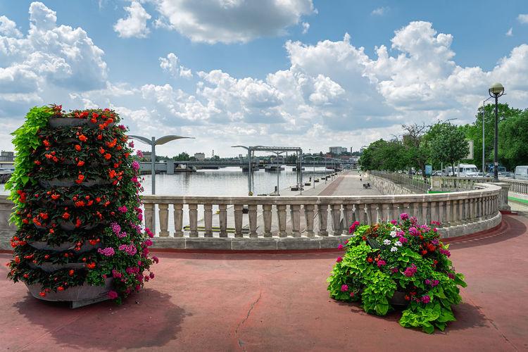 Flowering plants by bridge against sky