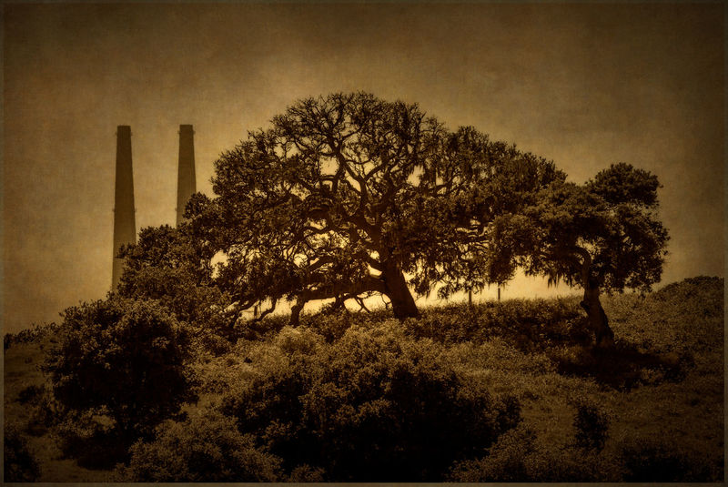Moss Landing Smoke Stacks. The Moss Landing power plant stacks peak out over a hillside next to the Elkhorn Slough Reserve. Art Beauty In Nature Black And White California Dark Day Elkhorn Slough Environment Landscape Large Group Of Objects Monterey Moss Landing Nature No People Oak Outdoors Sepia Smoke Stacks Texture Textured  Tree