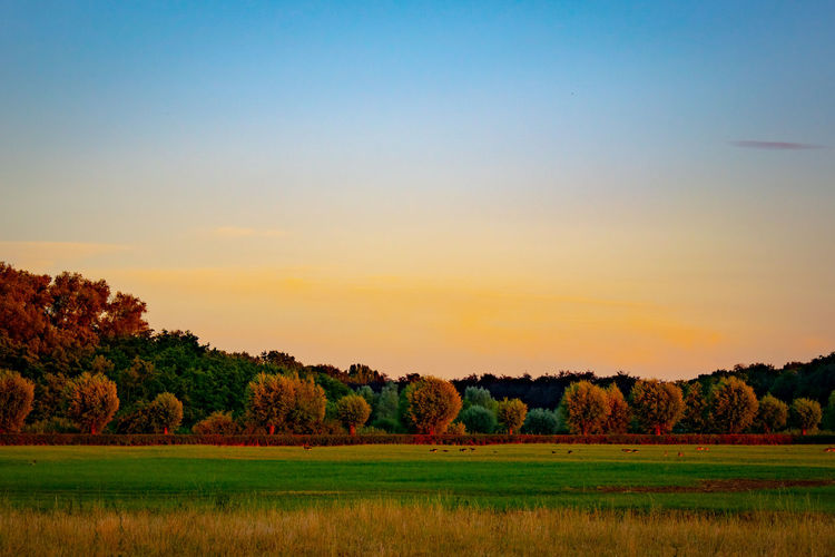 EyeEmNewHere Beauty In Nature Clear Sky Environment Field Golden Hour Grass Green Color Growth Idyllic Land Landscape Nature No People Non-urban Scene Outdoors Plant Scenics - Nature Sky Sunset Tranquil Scene Tranquility Tree The Great Outdoors - 2018 EyeEm Awards