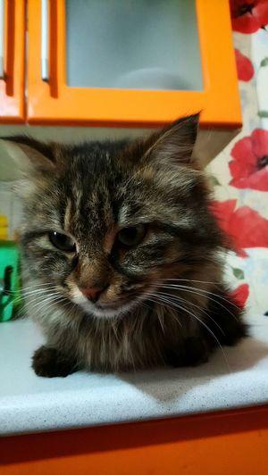 Кот... Pets Feline Domestic Cat Portrait Cat Black Color Close-up Animal Themes