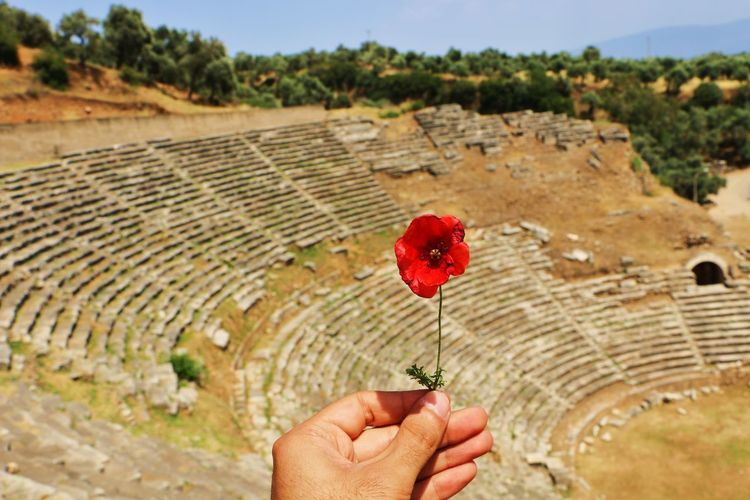 Hi! Hello EyeEm✌ Hello World Historical Building Historic Site Historcal Greek Greek Mythology Greek Theatre  Taking Photos Incredible_shots Amazing Atmosphere Turkey Turkeyphotooftheday Canonphotography Canon_photos Flower Red Flower Nice Day Talking Photos Enjoying Life NiceShot Aydin Aydin City Sultanhisar