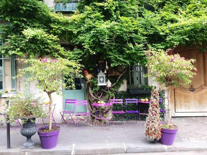 Cafe Paris House Shop Cute Flower First Eyeem Photo