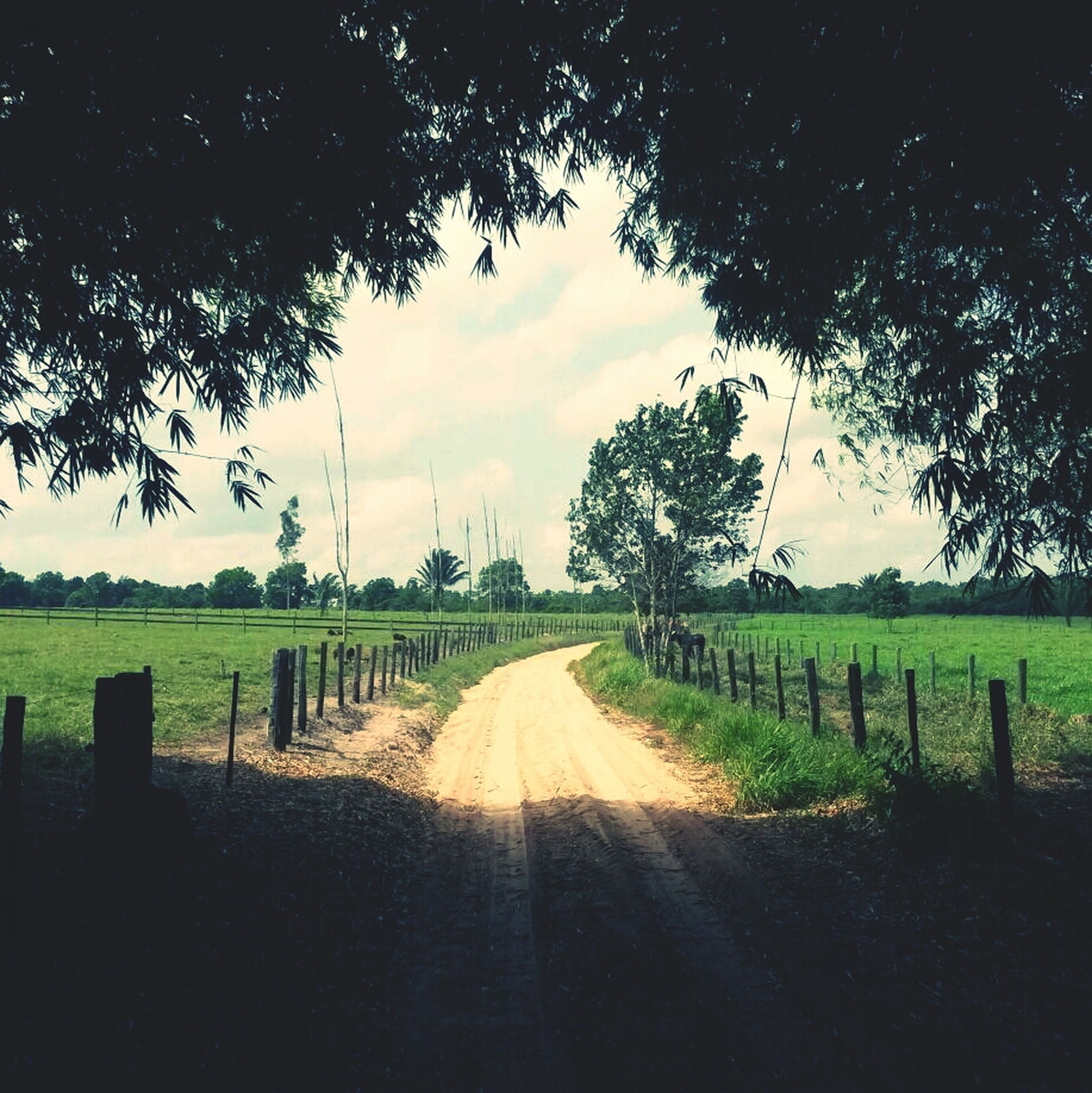 the way forward, field, sky, landscape, transportation, diminishing perspective, tranquility, road, rural scene, tree, tranquil scene, grass, vanishing point, country road, cloud - sky, nature, growth, agriculture, scenics, cloud