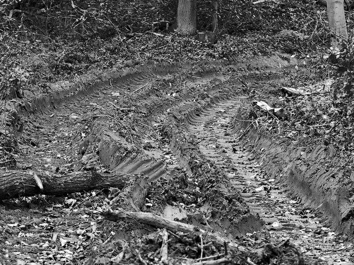 Spuren Hinterlassen Spuren Im Wald Day Field High Angle View Nature No People Outdoors Tree
