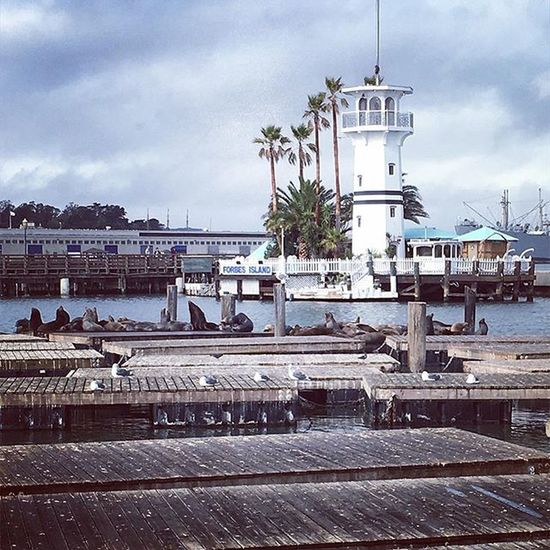 In love with the sea lions Day Harbor Outdoors Pier 39 San Francisco Sealions Travel Water
