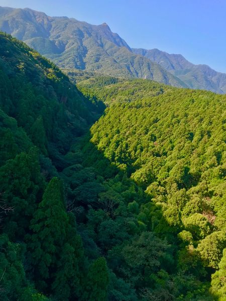 Mt. AIKO Forest Mountain Nature Beauty In Nature Scenics Mountain Range Tranquility Tranquil Scene
