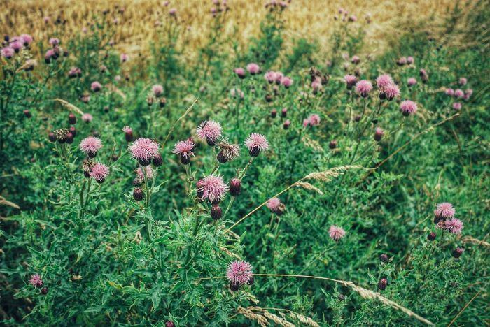 Fieldscape Nature Colour Of Life Landscapes Scotland Summertime