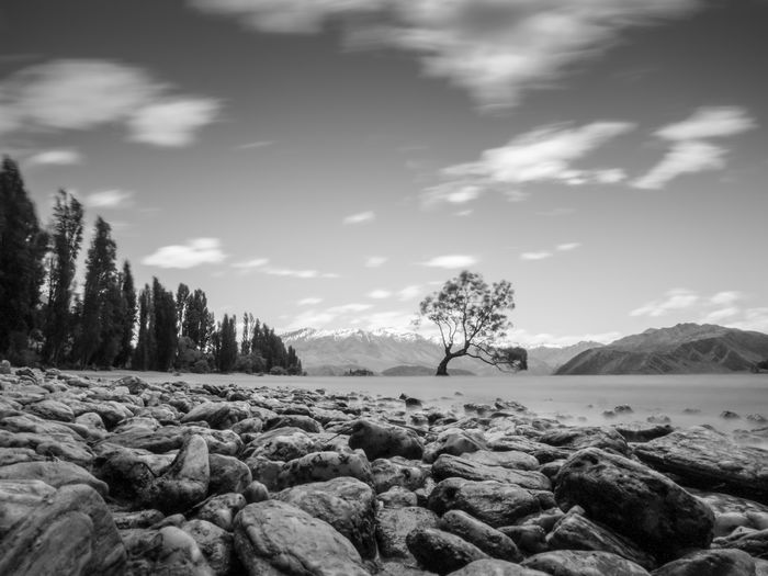 The tree in b&w. EyeEm Wanaka Wanderlust Alps Beach Beauty In Nature Blackandwhite Day Lakeshore Landscape Mountain Moving Clouds Natural Beach Nature Nature Shots New Zealand No People Outdoors Scenics Sky Stones Tranquil Scene Tranquility Tree Wanaka Tree Wanakalake