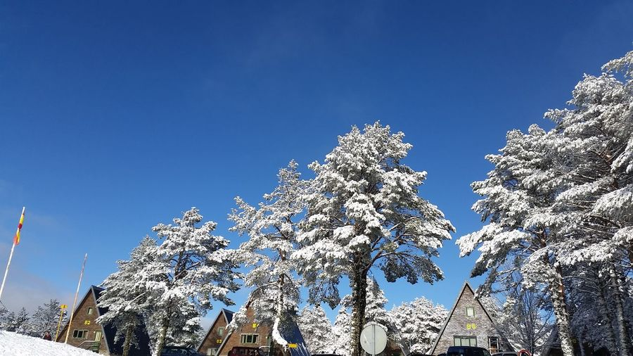 Nieve Low Angle View Sky Clear Sky Blue Day Outdoors No People Nature
