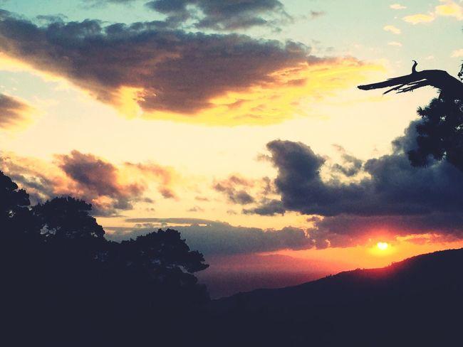 43 Golden Moments Sunset Sunset Silhouettes