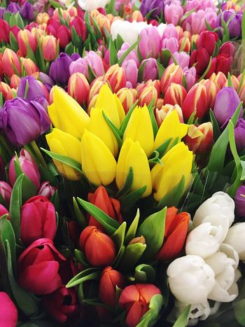 It's spring! ☺️💐🙏🏼 Spring Spring Flowers Tulips Colors Colorful Flowers Flower EyeEm Eyem Best Shots EyeEm Flower Hungary Beautiful Beauty In Nature VSCO