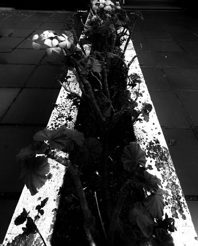 Shadow Street High Angle View People Social Issues Outdoors Nature ArtWork Architecture Flower Blackandwhite