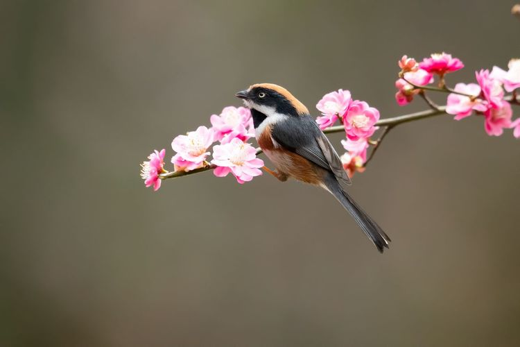 Close-up of bird on pink flower