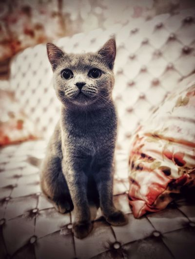 Portrait of kitten on bed at home