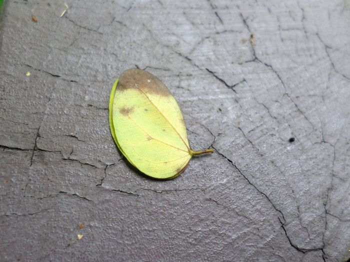 High angle view of yellow leaf on ground