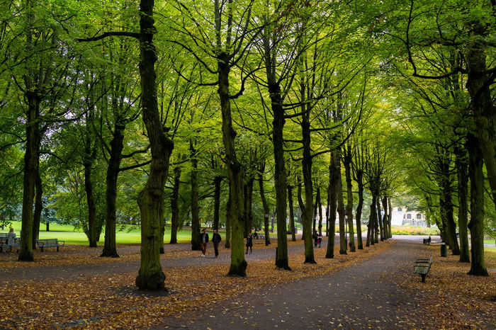 Autumn Autumn Scene Trees Beauty In Nature Nature Park Park - Man Made Space The Way Forward Tranquil Scene Tranquility Tree