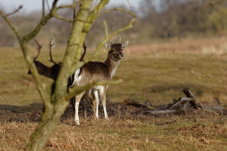 Spotted Young Buck Animal Wildlife Animals In The Wild Animal Animal Themes Mammal Field Land