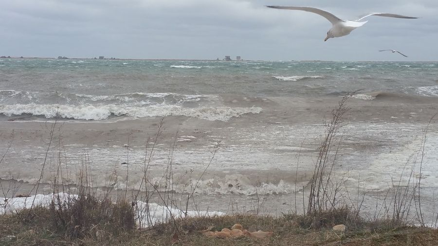 Plymouth Bay Noreaster Storm Saltwater Gulls