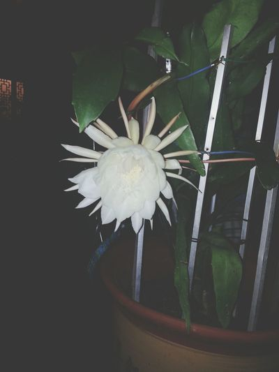 Do you know this flower?haha ,there is a proverb ,do u know what is a proverb?may be u know???