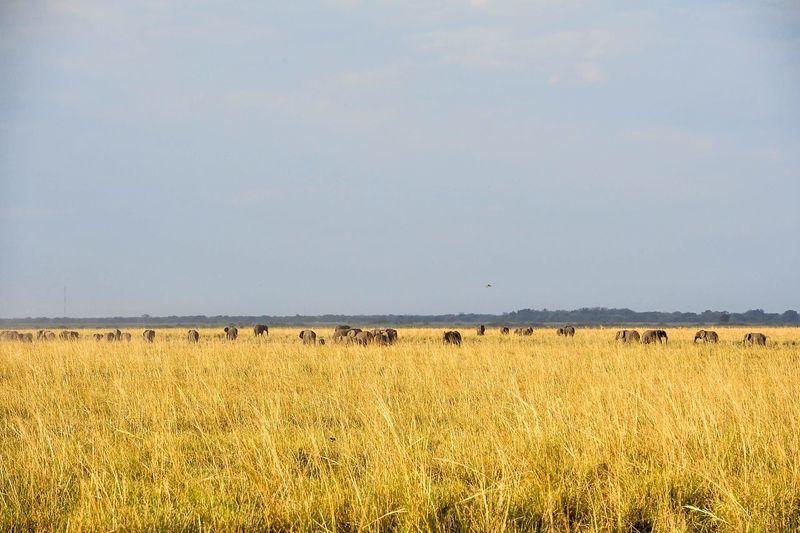 Here I Come !!! My Dreams Destination Africa African Safari Chobe Chobenationalpark Chobe River Big Five African Elephant BOTSWANA Chobe Botswana Photo Photooftheday Enjoying Life Sunset I Love My Life GameDrive Game Drive Love Nofilter