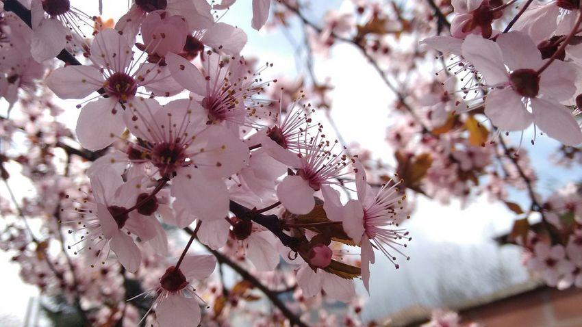 Italian Spring (original photo) Flowers Spring Flowers Hello World Enjoying Life Kwiaty Wiosna Oski Oskarjursza Italia Spring EyeEm Nature Lover