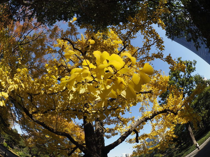 Tree Nature Yellow Beauty In Nature Sky Cityscape Taking Photos Streetphotography Fisheye Autumn Autumn Leaves Autumn Colors EyeEm Nature Lover Growth
