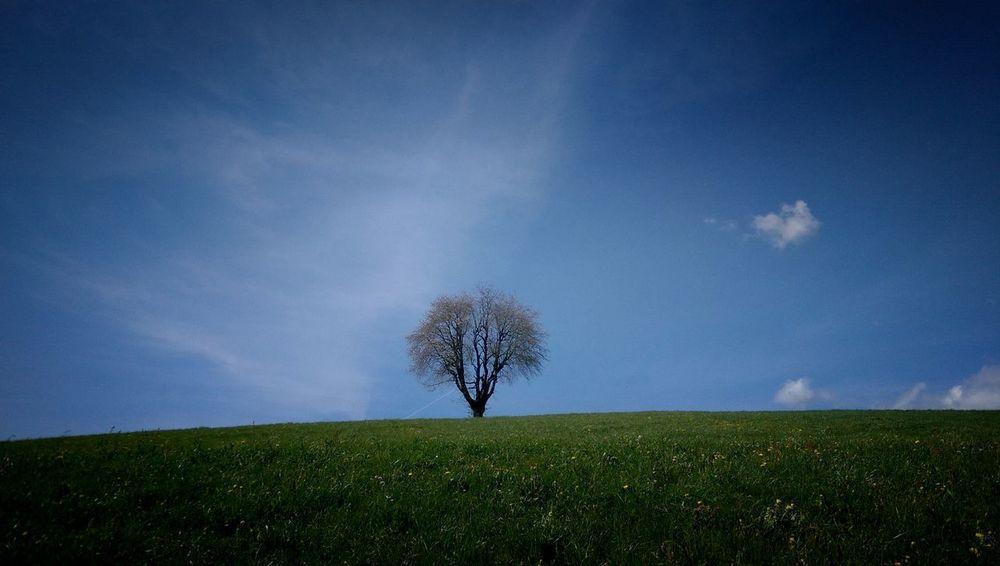 """Diesen Baum sehe ich immer wenn ich mit dem Auto Nachhause komme . Einmal wollte ich diesen """"Besuchen"""" - geschaft 😎 Running 2015 Nature Baum"""