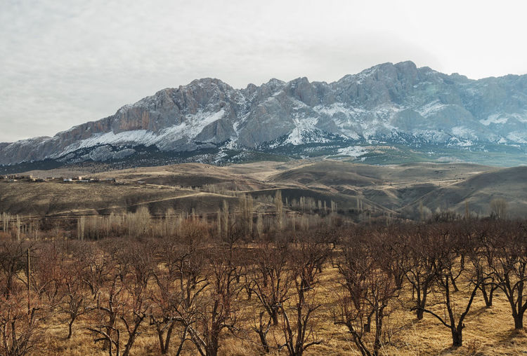 Snow Tops Aladağlar Beauty In Nature Branches Cloudy Day Landscape Mountain Mountains Mountains And Sky Nature Niğde Orchard Outdoors Scenics Snow Trees Trees And Sky Tundra Turkey Türkiye