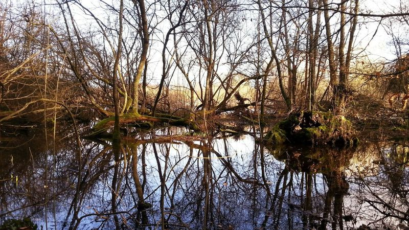 Water Reflections Water Reflection Outdoors EyeEm Nature Lover
