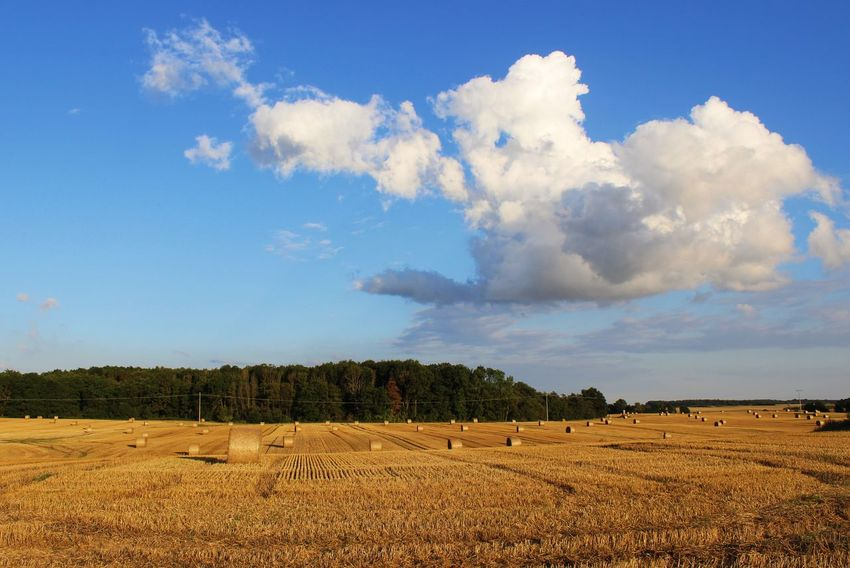 Agriculture Bale  Beauty In Nature Blue Cloud Cloud - Sky Cloudy Field Grass Growth Hay Hay Bales Horizon Over Land Idyllic Landscape Nature No People Non-urban Scene Outdoors Remote Rural Scene Scenics Sky Tranquil Scene Tranquility