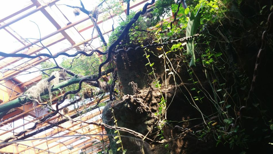 Trapped Day Nature Tree Branch Growth Cage Greenhouse No People Outdoors Close-up Beauty In Nature