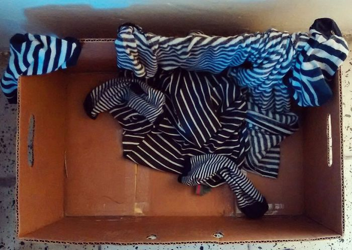 Box Calcetines Calm Childhood Close-up Clothes Day Indoors  Lines Mammal Messy No People Zebra