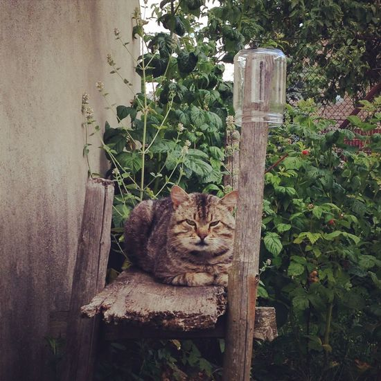 Angry Cat Animal Themes Cat Cats Country Life Countryside Day Domestic Animals Domestic Cat Feline Garden Glass Glass - Material Jar Mammal No People One Animal Outdoors Pets Plant Plants Resting Rustic Serious Watcher