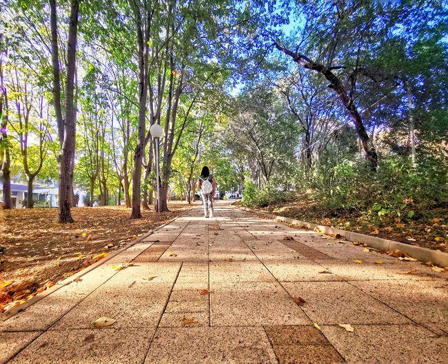walk away Tree