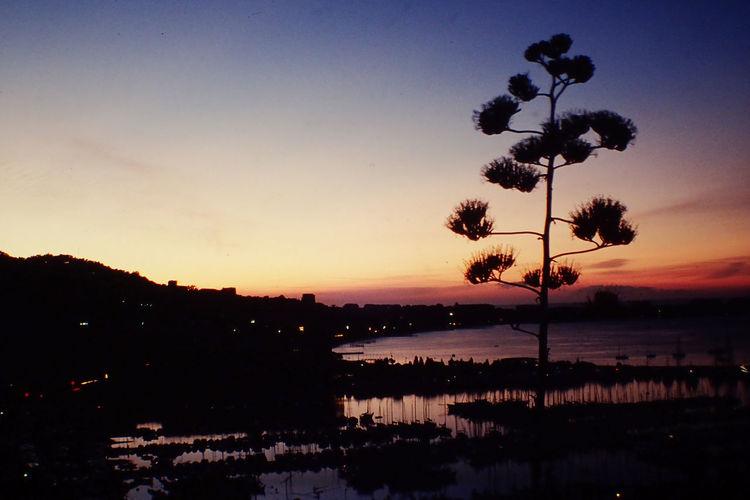 Beauty In Nature Cannes Cote D Az Côte D'Azur France No People Outdoors Scenics Sea Sunrise Tree