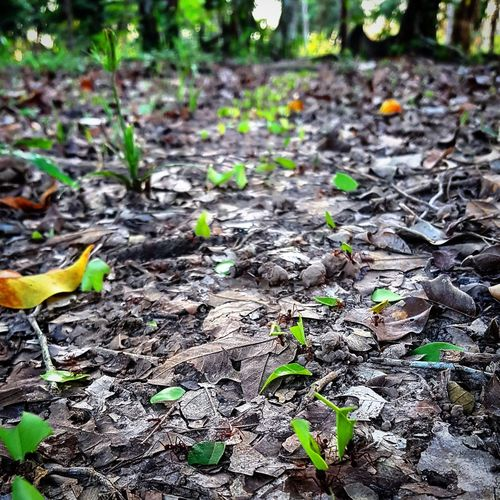 """""""Life finds a way."""" """"La vie trouve toujours son chemin."""" Ian Malcolm Abugslife Pucallpa Blogger Travelers Amazon 1001pattes Photographie  Naturelovers Peru Sunset Sky Nature Wildlife Photographer Perulife Province Blog Photography Amazonia Ucayali Wild Animal Bug Insect Ground Ant Leaves"""