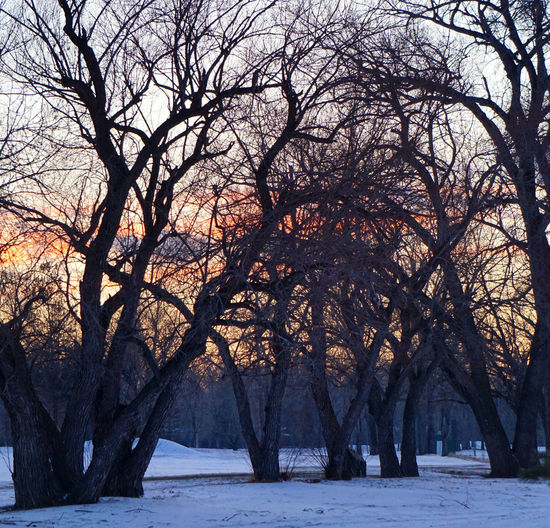 Snow Winter Trees Looking Through Sunset Sunset_collection Landscape_photography Alberta Canada EyeEm Best Shots Lethbridge Winter Eyemphotography Showcase:february Walk In Cold Winter Bushes Landscapes With WhiteWall