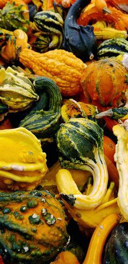 Gourds & Pumpkins Pumpkin Patch Pumpkin Fall