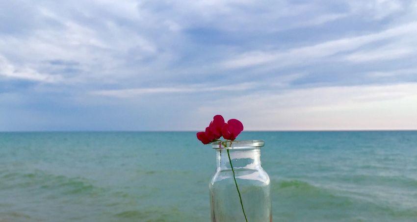 Single pink rose and blue sky and blue water Sky Minimalism Blue Horizon Over Water Horizon Flower Bottle Hope Sea Lake Rosé Minimal