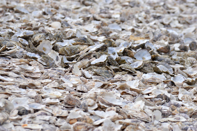 Full frame shot of pebbles on ground