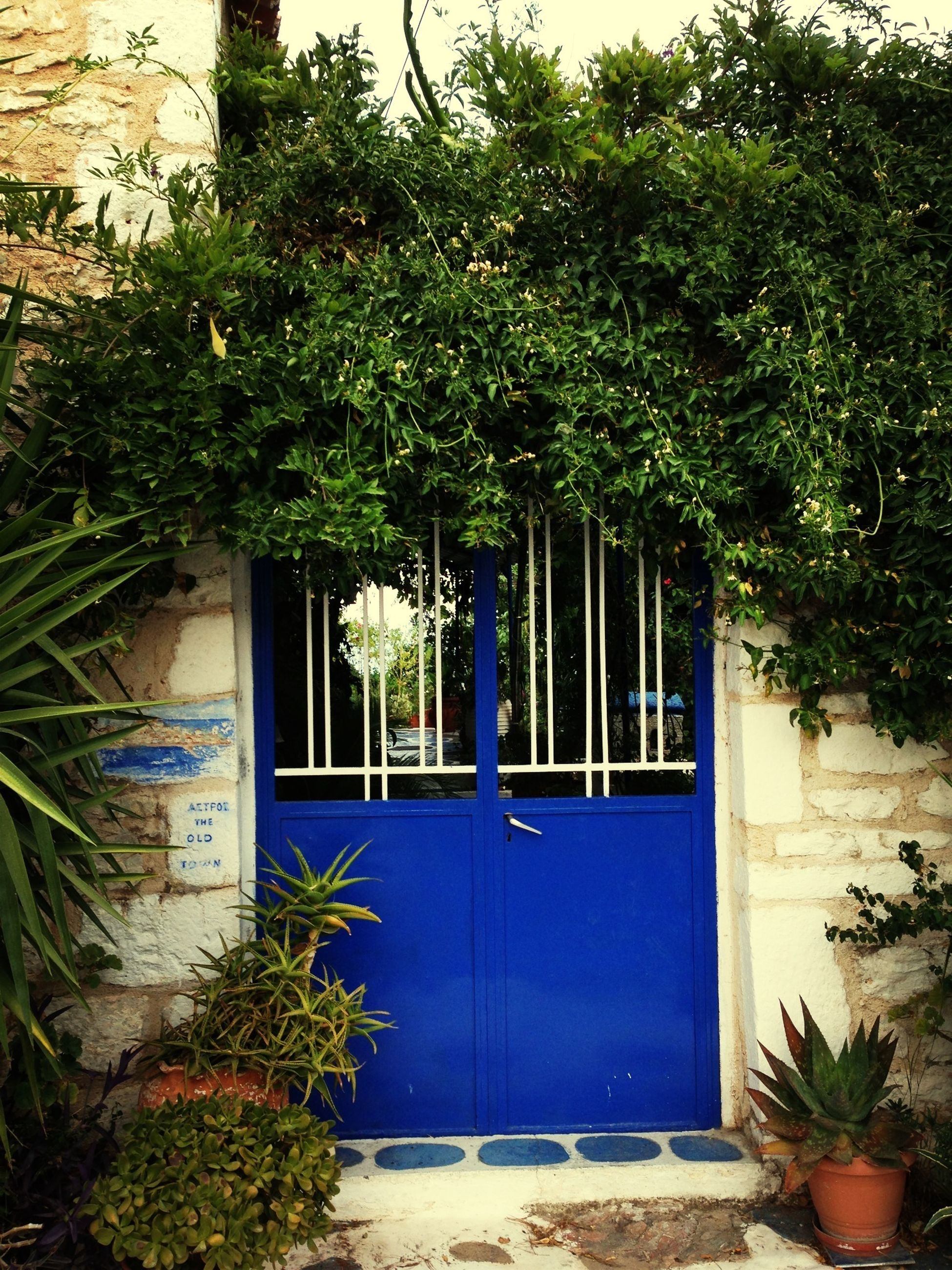 plant, built structure, architecture, building exterior, growth, house, green color, potted plant, door, tree, closed, wall, window, blue, ivy, wall - building feature, leaf, residential structure, green, day