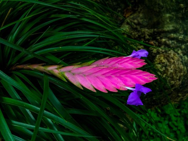 EyeEmNewHere EyeEm Nature Lover Plant Growth Pink Color Beauty In Nature Flower Close-up Animal Themes Flowering Plant Nature Freshness One Animal Animal Wildlife Vulnerability  Fragility Petal Plant Part Leaf Green Color Animal Insect