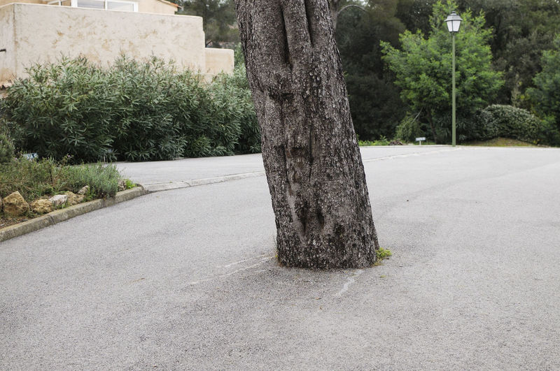 A tree grown in the middle of a road in the south of France Tree Tree Trunk Environment Environmental Conservation Environmental Issues Environmental Damage Environmentalist Plant Trunk Growth Nature Outdoors Green Color Beauty In Nature Empty Road No People Road Tranquility Street Diminishing Perspective Direction France Marseille EyeEm Best Shots EyeEm Nature Lover