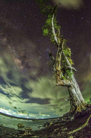 Glimpse of milkyway Galaxy Astronomy Milky Way Milkyway Stars Starry Night Sea Astrophotography Beach Trees Dead Tree Sabah Malaysia Long Exposure Cloud Moving Clouds Fisheye Distortion Upward View Sky Night
