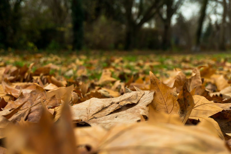 Leaves on the floor Plant Part Leaf Autumn Tree Change Dry Leaves Selective Focus Plant Nature Land No People Close-up Day Forest Falling Outdoors Surface Level Field Tranquility Natural Condition Dried Maple Leaf Fall