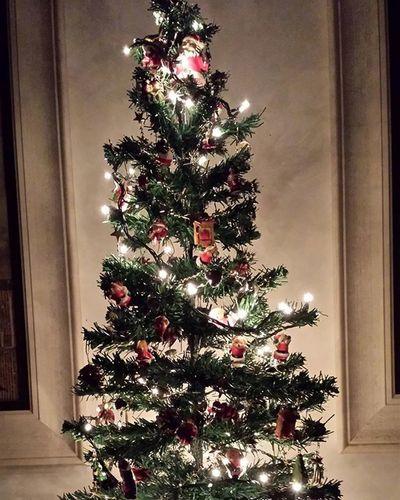 Dia85 Gratidão a Deus Único. Há muito, muito tempo, na noite de Natal, existiam três árvores junto do presépio: uma tamareira, uma oliveira e um pinheiro. Ao verem o Menino Jesus nascer, as três árvores quiseram oferecer-lhe um presente. A oliveira foi a primeira a oferecer, dando ao Menino Jesus as suas azeitonas. A tamareira, logo a seguir, ofereceu-lhe as suas doces tâmaras. Mas o pinheiro, como não tinha nada para oferecer, ficou muito infeliz. As estrelas do céu, vendo a tristeza do pinheiro, que nada tinha para dar ao Menino Jesus, decidiram descer e pousar sobre os seus galhos, iluminando e enfeitando o pinheiro. Quando isto aconteceu, o Menino Jesus olhou para o pinheiro, levantou os braços e sorriu! Reza a lenda que foi assim que o pinheiro – sempre enfeitado com luzes – foi eleito a árvore típica de Natal🎄. Gratidão pelas estrelas do infinito. Bons sonhos. Desafiodagratidao2015 Entrego Aceito Confio Agradeço EuPosso Euconsigo Eumereco Clickdri Meupinheiro Natal2015 Nofilter Flor Natureza Cor Inspiração Motivacao Vida Verde Ar Luz Amor Jardim Aroma sol chuva fé gratidão Deus