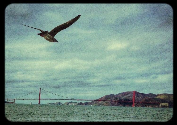 Golden Gate Bridge desde el agua. Popckorn