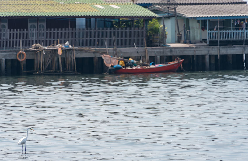 Thailand Photos Animal Themes Architecture Building Exterior Built Structure Day Mode Of Transport Moored Nature Nautical Vessel Outdoors Pataya Real People Transportation Water Waterfront