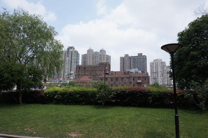 Architecture Cat China Focus On Foreground Heritage Holiday Landscape Museum Salmon Shanghai Sushi